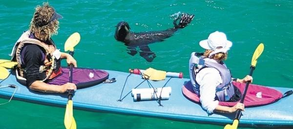 Tonga Island Seals Guided Sea Kayaking