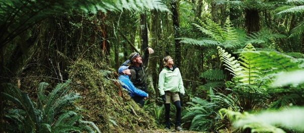 Native Lowland Temperate Rainforest Hollyford Track Guided Walk