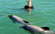Akaroa Swim with the Dolphins from Christchurch
