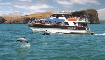 Akaroa Day Tours & Cruises