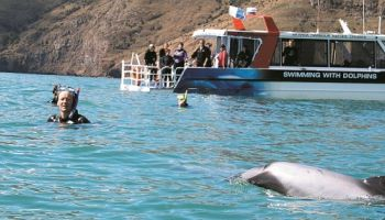 Akaroa Harbour Cruises