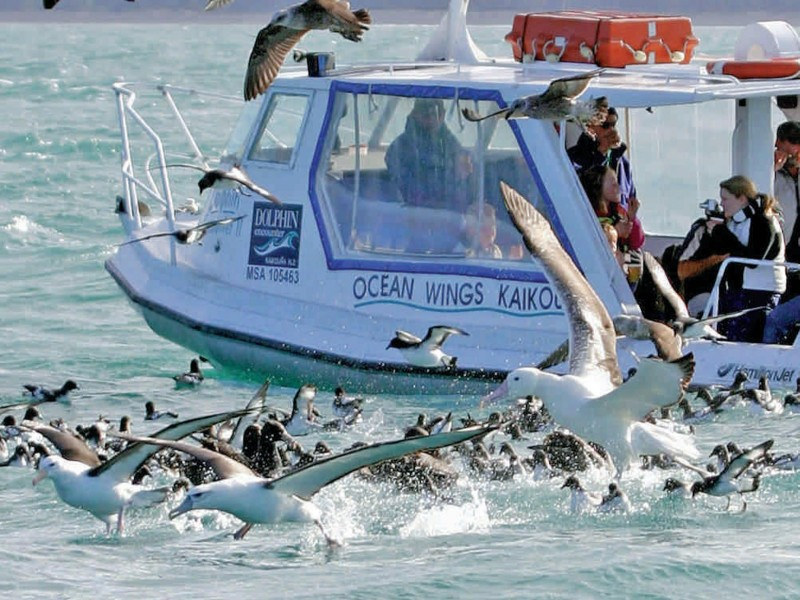 Kaikoura Albatross Encounter from Christchurch