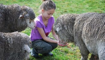 Akaroa Farm Tour from Christchurch