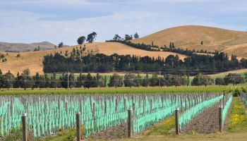 Half Day Wine & Christchurch City Tour