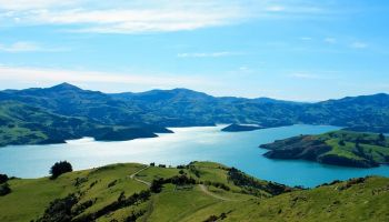 Akaroa and Banks Peninsula Wild Penguins Eco-Tour