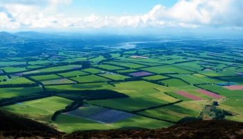 New Zealand Farm and Scenic Day Tour