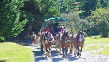 Lord of the Rings Pioneering Experience (with optional Clydesdale Wagon Ride)