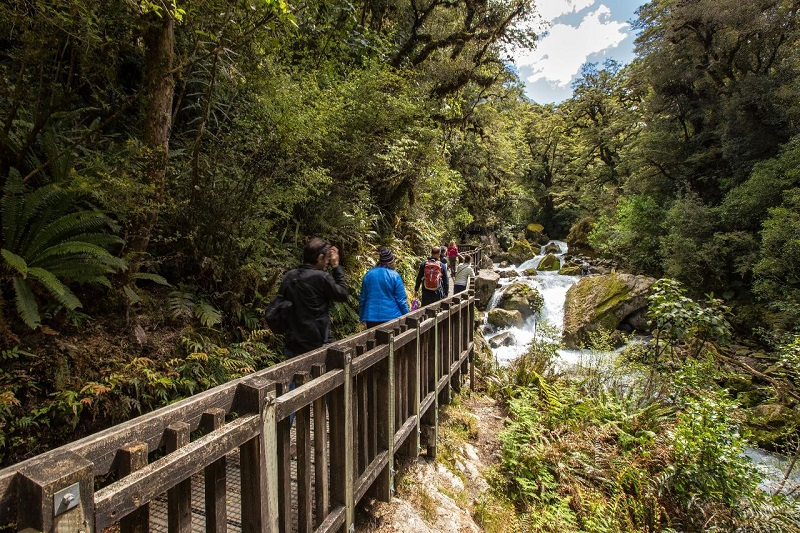 Milford Sound Coach, Cruise & Walk from Te Anau