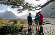 Milford Track Guided Walk from Milford Sound