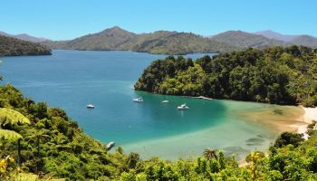 5 Day Custom Independent Premier Queen Charlotte Track Walk