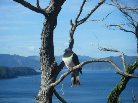 Sunday Afternoon Marlborough Sounds Cruise