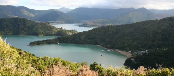5 Day Boutique Queen Charlotte Track Lochmara Lodge Independent Walk
