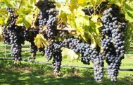SOLO SPECIAL: Full Day Wine Gourmet and Scenic Delights Tour from Blenheim