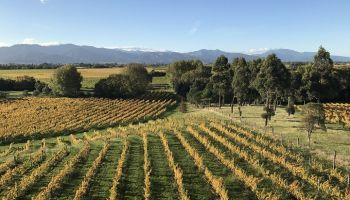 Winter Wine Gourmet and Scenic Pleasures of Marlborough: Small Group Tour