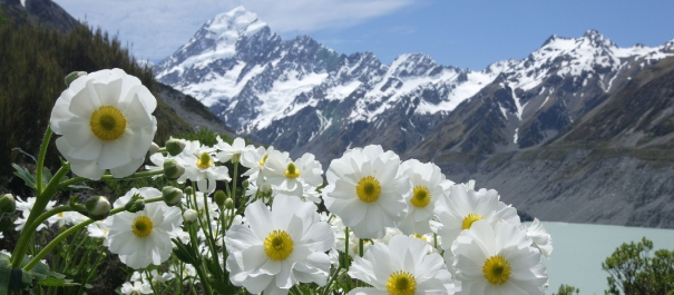 Mt Cook Adventure Tour from Queenstown