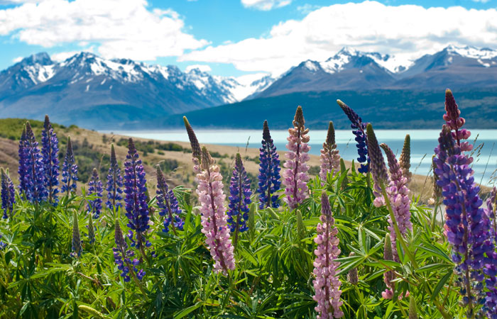 19 Day New Zealand Showcase Luxury Coach Tour