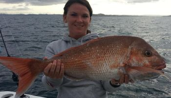 Bay of Islands Snapper Morning Fishing