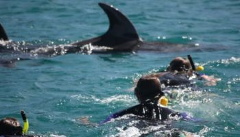 Bay of Islands Dolphin Discovery