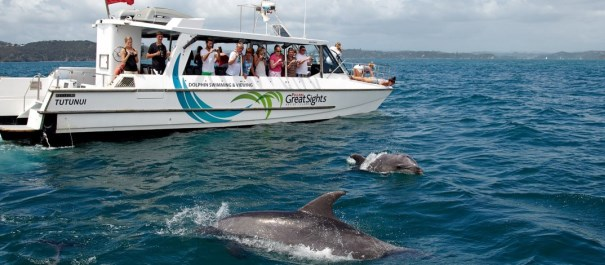Bay of Islands Tour and Swim with the Dolphins Cruise