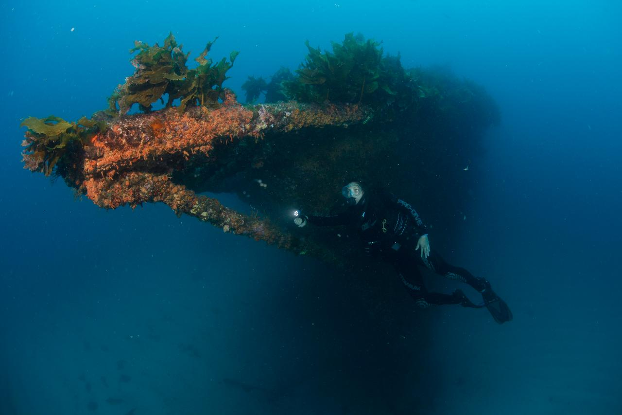 Rainbow Warrior Wreck and Reef Dive Trip