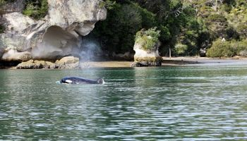 Cathedral Cove and Orua Sea Cave Limitless Tour (2.5 hours)