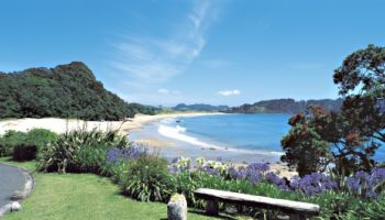 Coromandel Wanderer Small Group Tour
