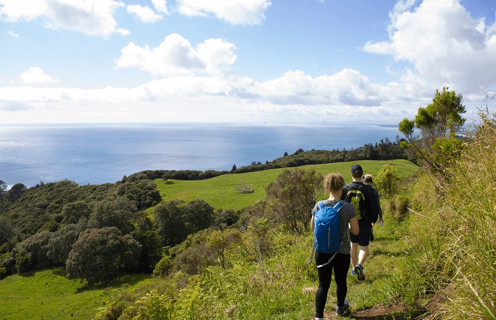 Coromandel Coast & Cuisine Experience Full Day Tour