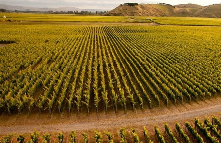 Napier City Highlights and Winery Private Tour