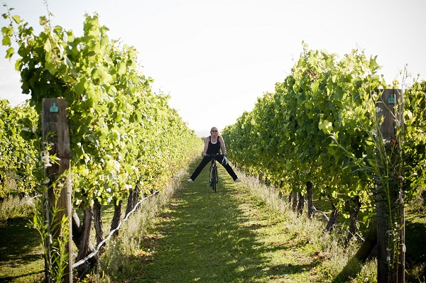 Havelock North and Cape Coast Wineries Self Guided Cycle