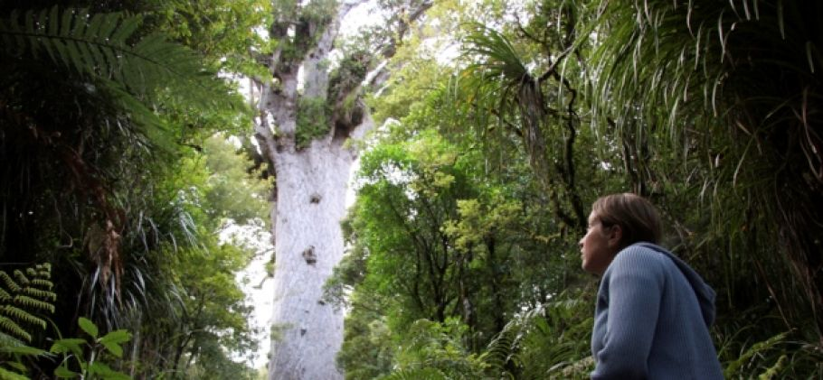 Bay of Islands to Snells Beach via Waipoua Forest