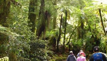 Te Urewera Rainforest Tree Planting Trek