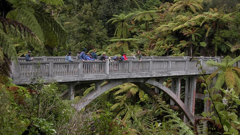 3 Day Whanganui National Park Guided Canoe