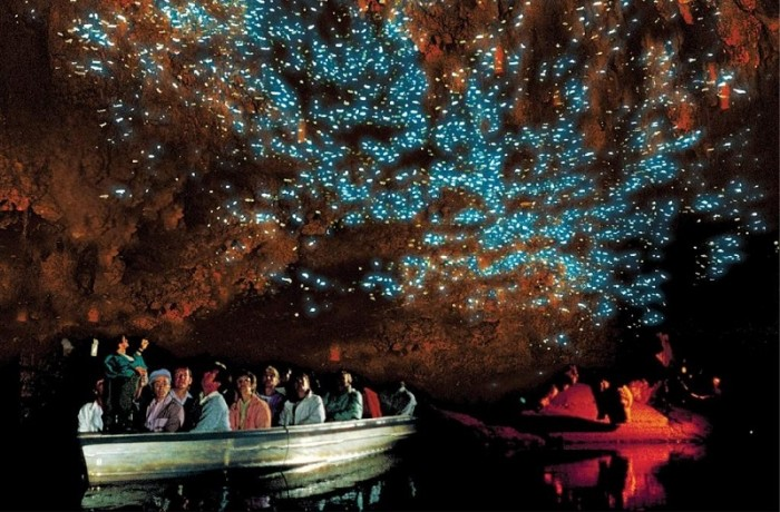 Auckland to Waitomo Caves Private Tour