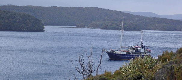 6 Day Stewart Island Discovery Cruises