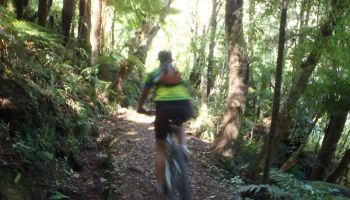 1 Day Wakamarina Mountain Bike Trail